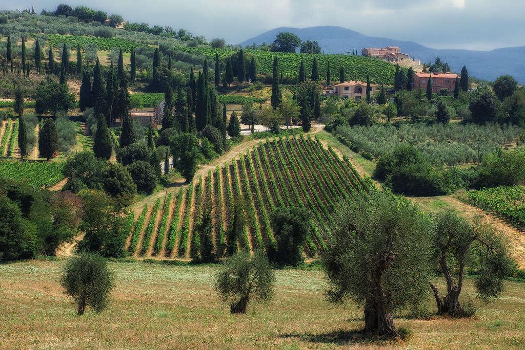 vigne brunello montalcino