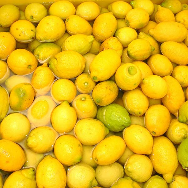 limoncello liquore limone