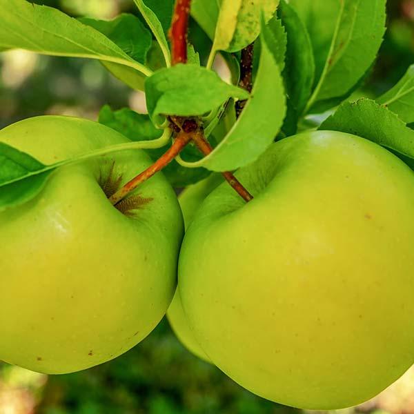liquori mela verde